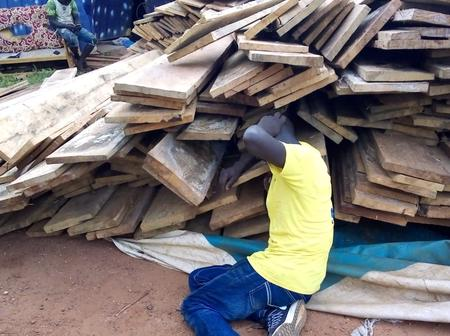 B/R: Dormaa Municipal Assembly Ceases Timber Market, Trucks With Timber Falls