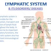 The lymphatic system and tissue fluid
