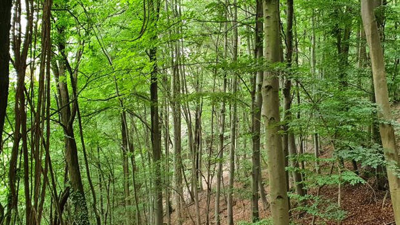 Hoher Freizeitdruck in Hessens Wäldern - Lebensraum der Wildtiere in Gefahr