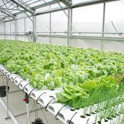 Cover Crop Planting Methods