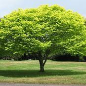 ما هي الشجرة الملعونة التى ذكرت بالقران؟ وأين توجد؟ ولماذا وصفها الله بذلك؟
