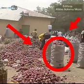 It Used To Be N35,000, But Now It Is N7000 - Farmers Lament Over The Price Of Onions In Kano