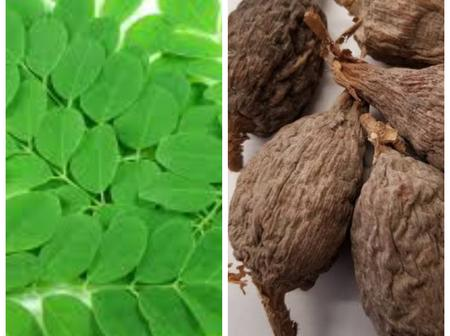 Grind Moringa And Alligator Pepper, Take 1 Spoonful Twice Daily For These Effects