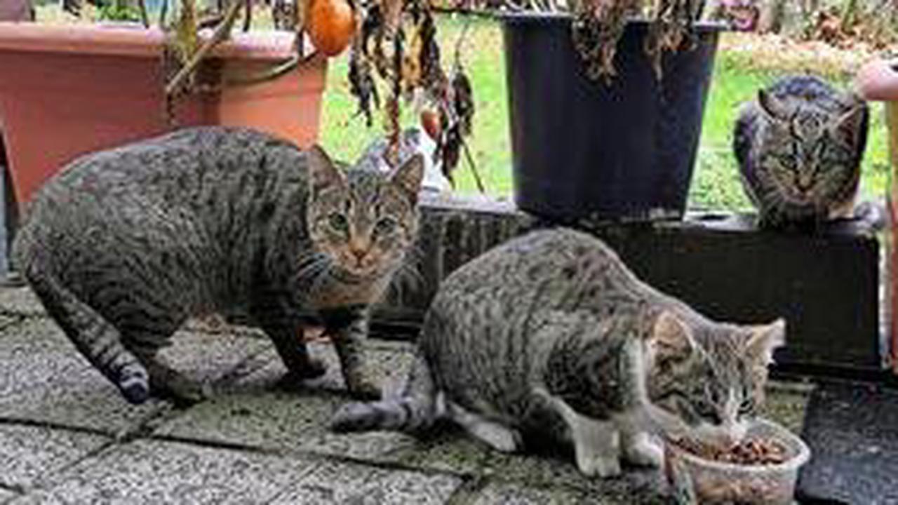 Tierschutzverein Prignitz: Wer zahlt für Fundtiere und wer für Streuner