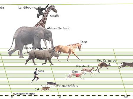 Which well evolved creature can run for a very long time without getting drained?
