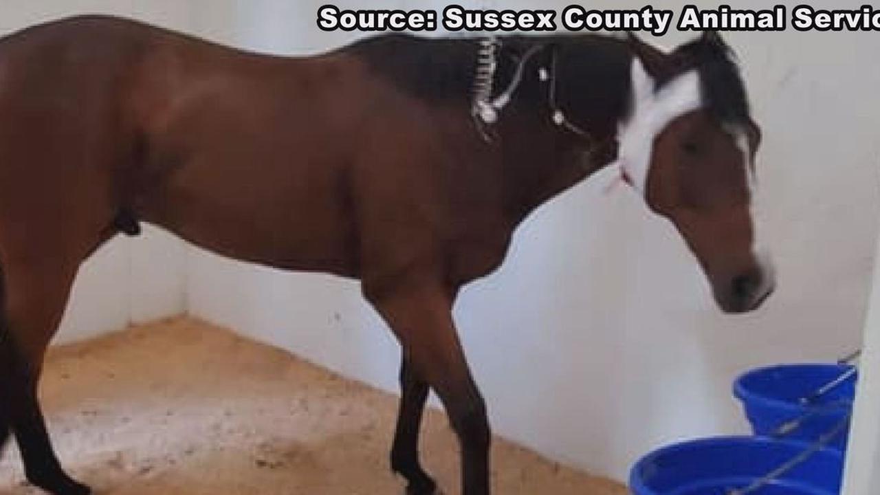 Horse injured in I-95 crash dies