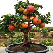Two Dwarf Fruit Trees You Can Grow In Your Garden For Easy Harvest
