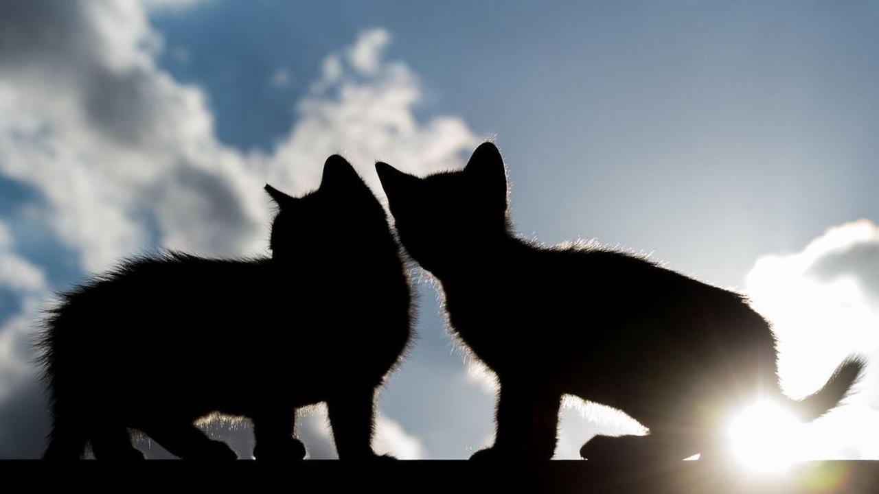 Tierschutz: In Oder-Spree wird jeden dritten Tag Tierquälerei angezeigt