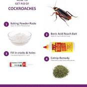 Home Remedies On How To Kill Cockroaches In Just Three Days