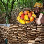 Voici le prix du kilogramme de Cacao de la campagne 2020 fixée par Ouattara