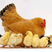 Best Poultry Guide For You