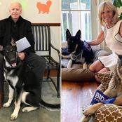 See The Photos And Video Of Joe Biden's Big Dogs That Just Arrived At The White House