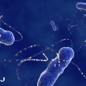 يصمد جهاز المناعة في مواجهة كورونا عندما يتم تنشيط نوع من البكتريا داخل معدتك.. كيف يتم تعزيزها؟
