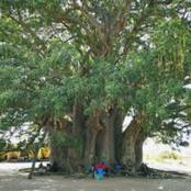Sagesse et philosophie de vie pour tous: sur le chemin de l'école du caméléon
