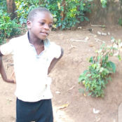 Class Three Pupil Dies After Falling From A Tree