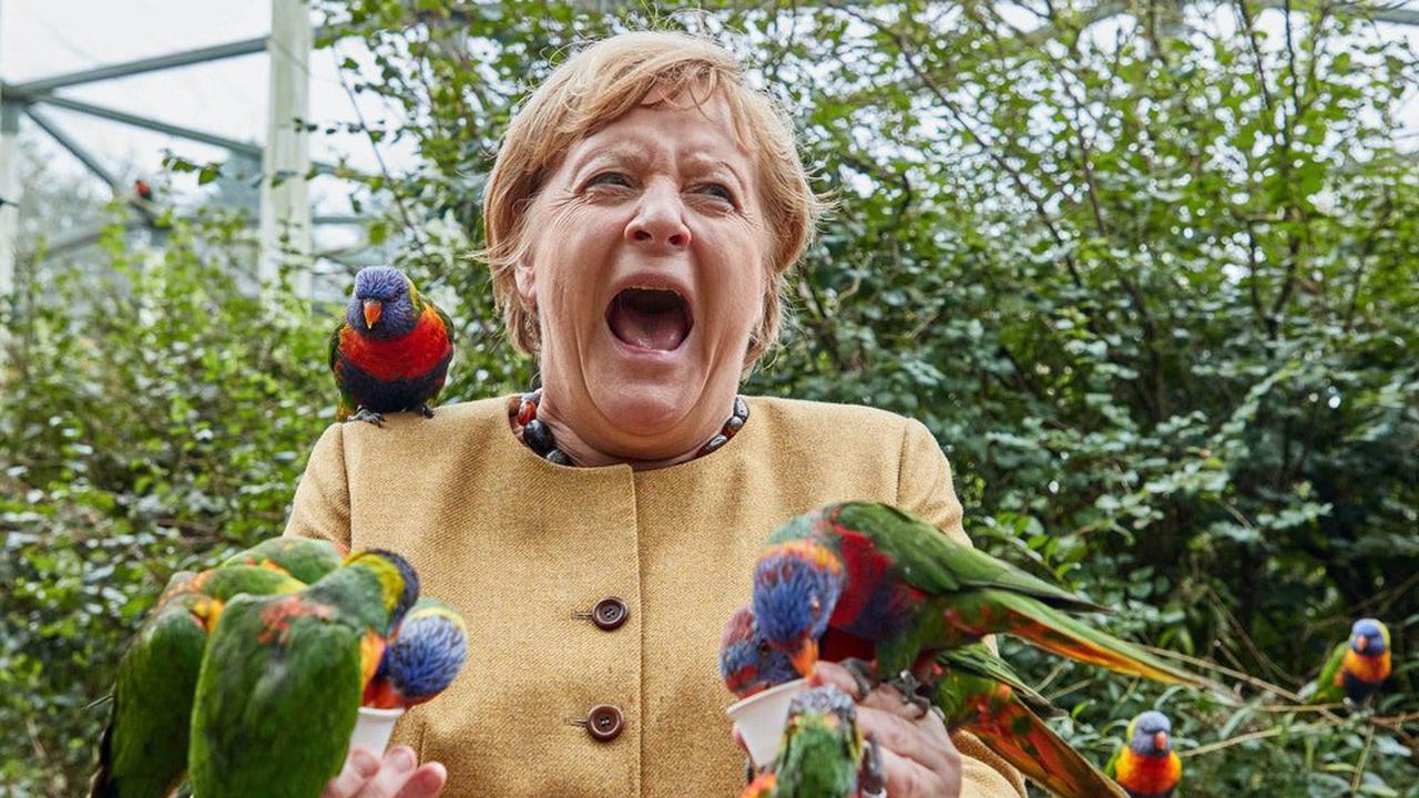 Angela Merkel: Kanzlerin wird von Vogel gebissen