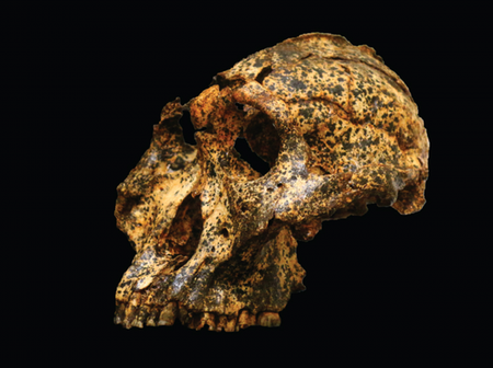 Discovery of two-million-year-old skull in South Africa throws new light on human evolution