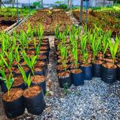 Here is How Every Gardener Can Still use Coconut Fibre