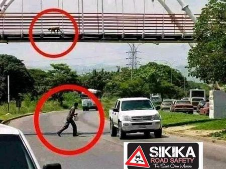 Reactions As A Dog Is Spotted Using A Footbridge And A Man Using The Road Instead Of A Footbridge