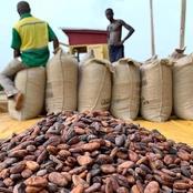 Côte d'Ivoire / économie : des producteurs de cacao menacent de boycotter des industriels
