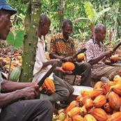 Le Conseil Café-Cacao aux planteurs : Arrêtez de produire le cacao...