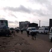 Yopougon carrefour zone/ un troupeau de bœufs provoque chaque matin des embouteillages