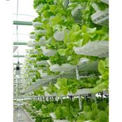 Is it possible to grow vegetables inside the house ?