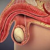 One Danger Of Damage Of Sensory Nerves Of Men In Relation To Their Potency