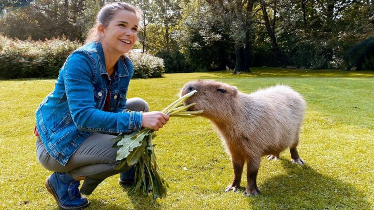 """""""Anna und die wilden Tiere"""" bei KiKa im Stream und TV: Folge 89 der Tierreportage"""