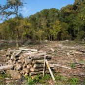 How does the cutting down of trees affect the environment ?