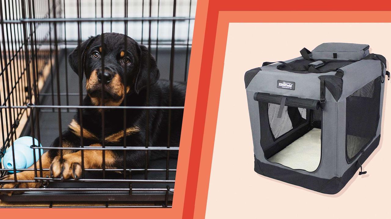 Expert shopping: Dog crates
