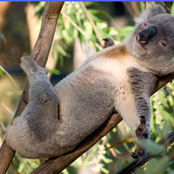 Top 6 Laziest Animals In The World