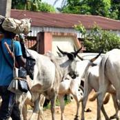 Cattle Sellers Begin Strike Today, Check Out Their Reason