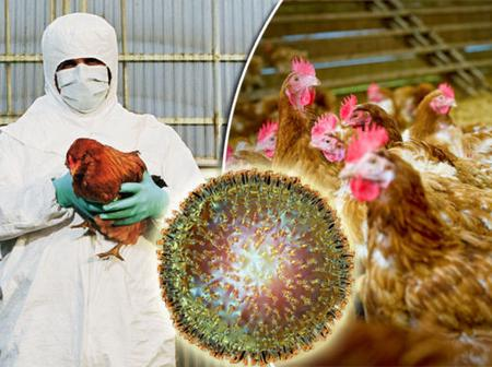 Niger State Reports Outbreak of Bird Flu