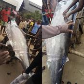 Checkout The Strange Fish That Was Caught In Andoni LGA Rivers State Today [Photos]