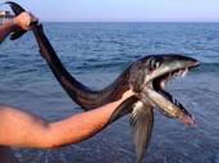 Strange Fish Species