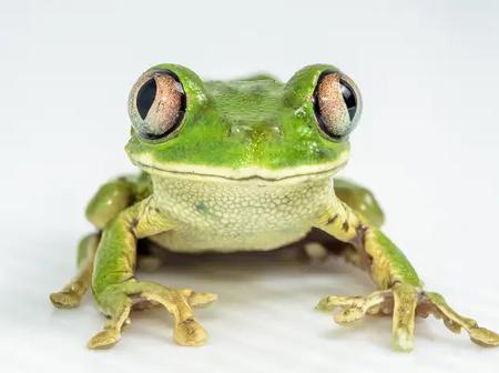 These will happen if you eat a frog