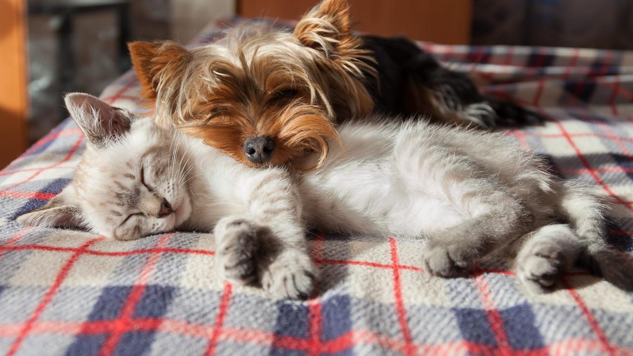 Top 10 ways pets improve wellbeing include calmness, laughs and positivity