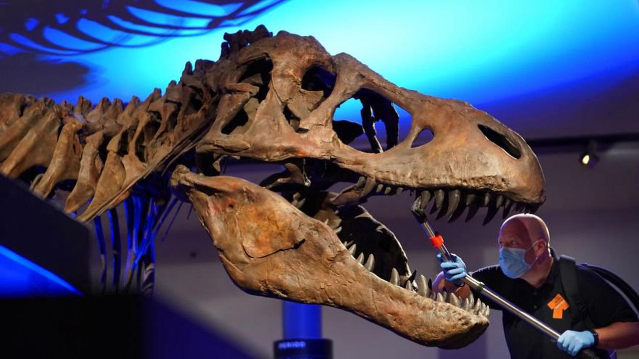 This Study Estimates The Dinosaurs On Earth Numbered At 2.5 Billion