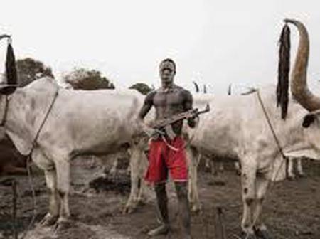 Herders invade farms in Delta, pursue farmers