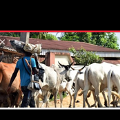 We prefer losing farm items than our lives - Cattle dealers insist no food to south.