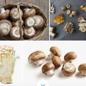 The Value of Mushroom in Your Diet