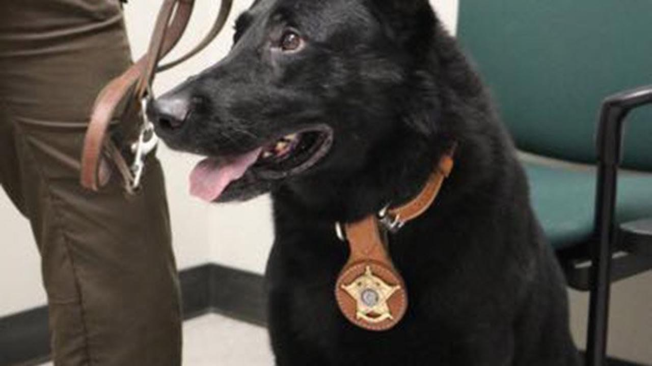 Police dog Bear helps recover stolen cigarettes and beer following Folkestone burglary