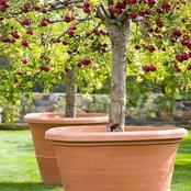 3 Factors To Consider When Trying To Grow Fruit Trees In Your Garden