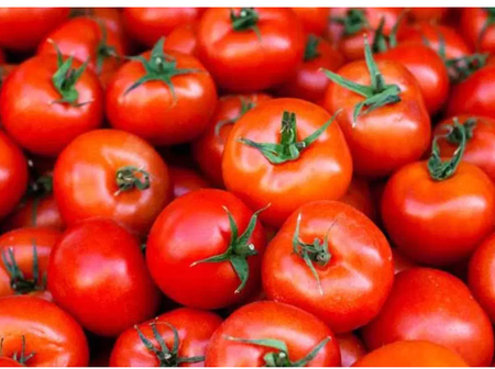 Perfect source of Vitamins: Raw Tomatoes and its added benefits