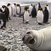 The Craziest WildLife funny Photos Ever Before