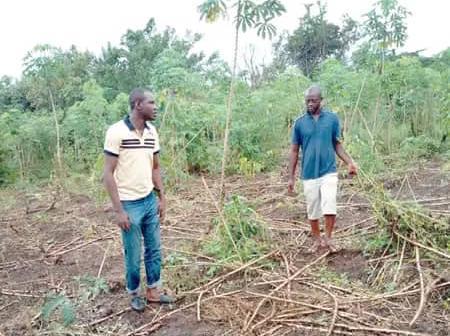 Fulani Crisis: See what happened after Wakili Isiku fled from Kajola and other villages.
