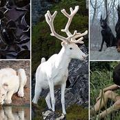 10 Rare And Coolest Albino Animals That Look Like They Came From Another World