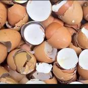 Don't Throw Away Egg Shells, You Can Use Them In Following Ways