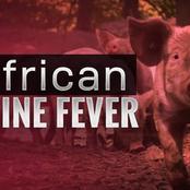 No threat to human, African swine fever, Mfuleni Western cape.